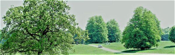 Henham Park